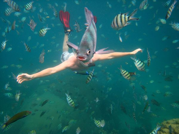 fish photobomb - pichars.org