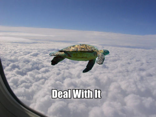 Turtle with Funny Captions
