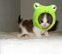Angry Frog, Cute Kitty