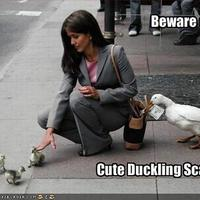 beware of cute duckling scam