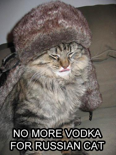 Kawaii Kitties  - Page 2 597_original_wvEPL
