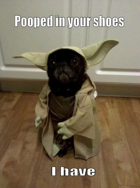 pooped in your shoes I have -yoda dog