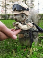 tactical squirrel