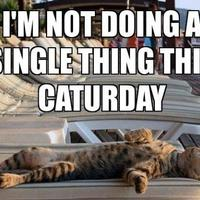 this caturday...
