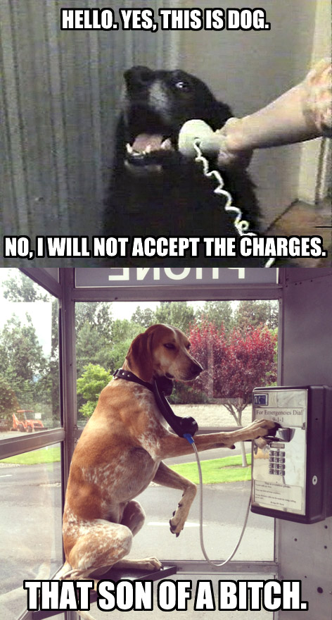dog does not accept charges
